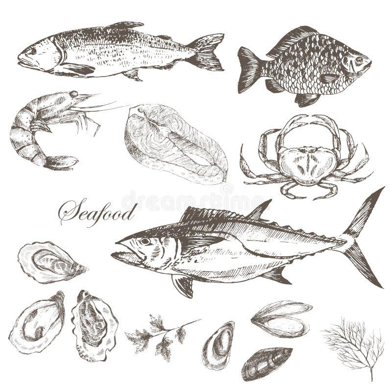 Vectorhand getrokken geplaatste zeevruchten - garnalen, krab, zeekreeft, zalm, oesters, mossel, tonijn, forel, karper Mediterrane royalty-vrije illustratie