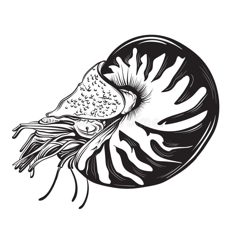 Vectorhand getrokken illustratie van schaaldierennautilus in realistische stijl stock illustratie