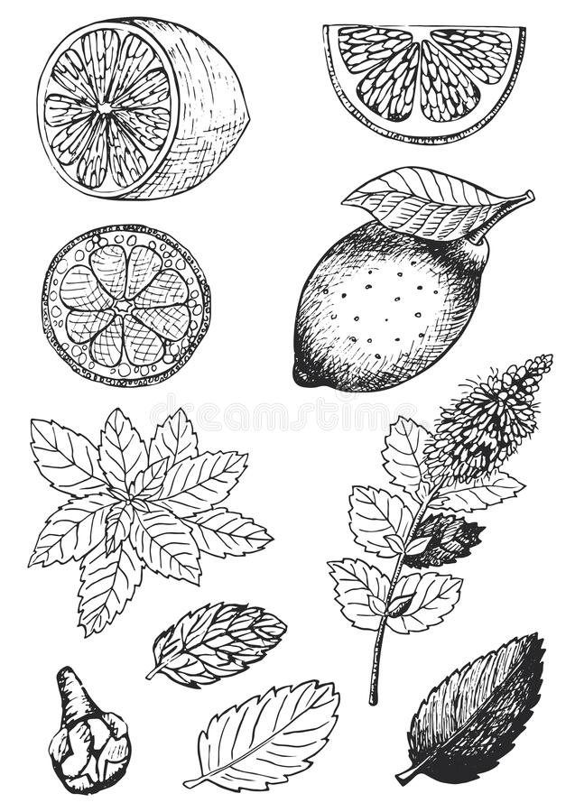 Vectorhand getrokken illustratie van verschillende ingrediënten voor thee het drinken royalty-vrije illustratie