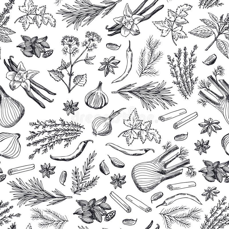 Vectorhand getrokken kruiden en van het kruiden achtergrond of patroon illustratie vector illustratie