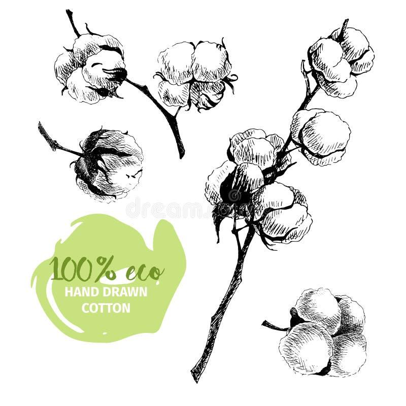 Vectorhand getrokken reeks katoenen takken eco 100 Katoenen bloemknoppen in wijnoogst gegraveerde stijl royalty-vrije illustratie