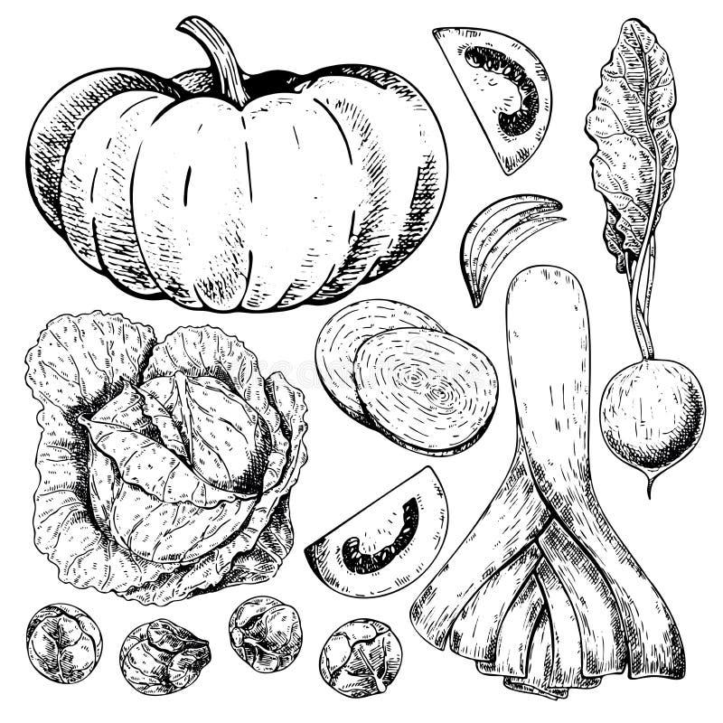 Vectorhand getrokken reeks landbouwbedrijfgroenten Geïsoleerde pompoen, kool, spruitjes, prei, tomaat, ui, radijs vector illustratie