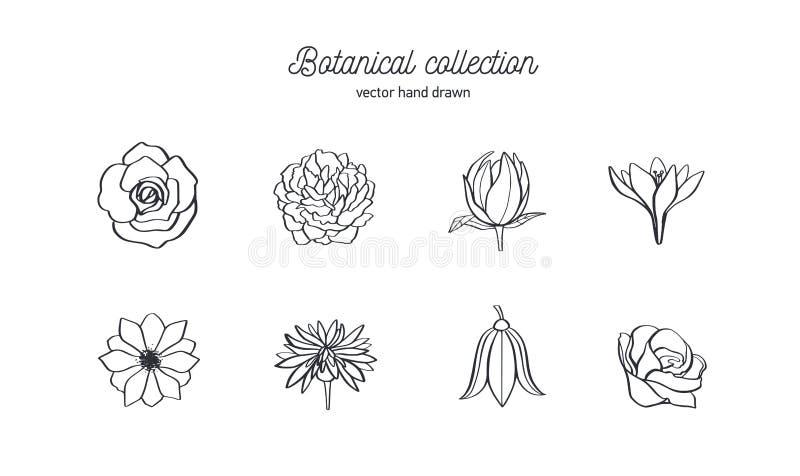 Vectorhand getrokken reeks wilde bloemen Rozen, pioen, anemoon en andere De botanische illustratie van de krabbelstijl stock illustratie