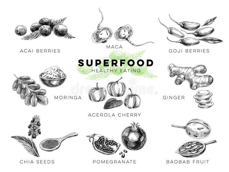 Vectorhand getrokken superfood Illustratie stock illustratie