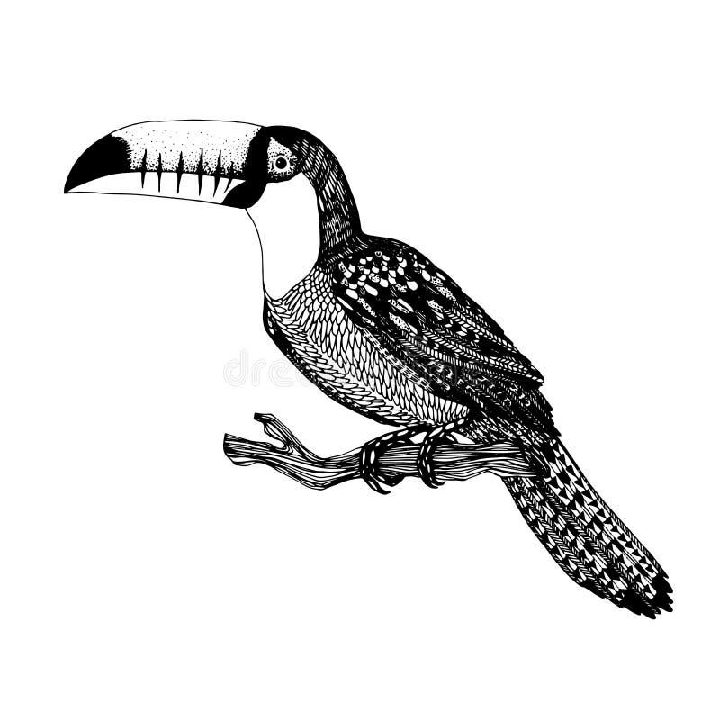 Vectorhand getrokken vogel stock illustratie