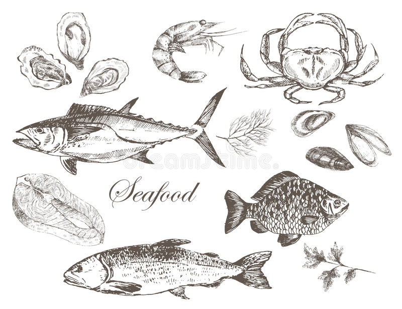 Vectorhand getrokken zeevruchtenreeks stock illustratie