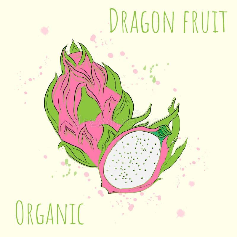 Vectorillustratie met het beeld van draakfruit stock illustratie