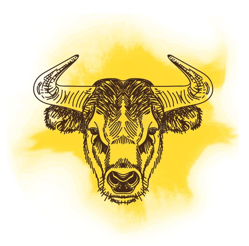 Vectorillustratie met stierenhoofd Getrokken hand royalty-vrije illustratie