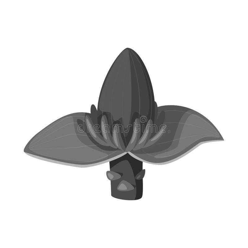 Vectorillustratie van banaan en bloemembleem Inzameling van banaan en tropisch vectorpictogram voor voorraad royalty-vrije illustratie