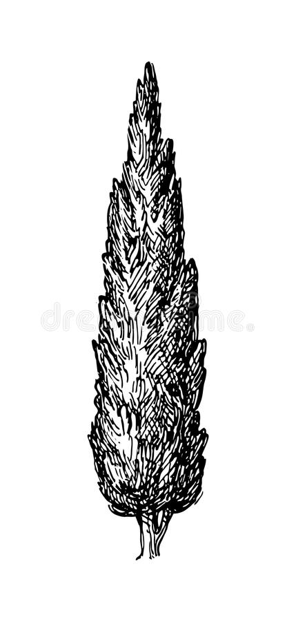 Vectorillustratie van cipres vector illustratie