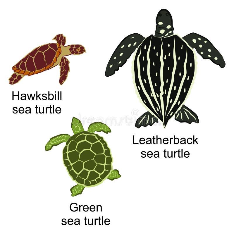 Vectorillustratie van drie soorten schildpadden stock illustratie