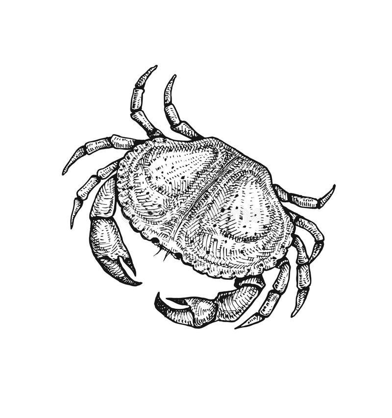 Vectorillustratie van een krab Hand getrokken schets stock illustratie