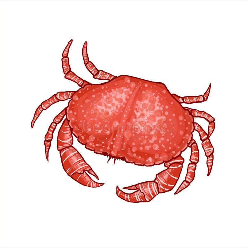 Vectorillustratie van een krab in realistische stijl vector illustratie