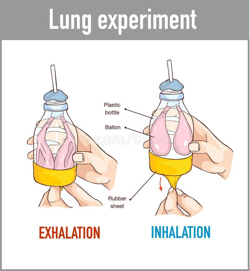 Vectorillustratie van een Long ademhalingsmodel royalty-vrije stock foto's