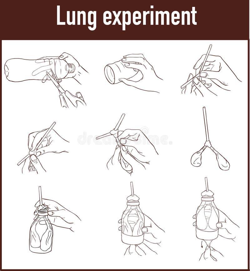 Vectorillustratie van een Long ademhalingsmodel stock afbeelding