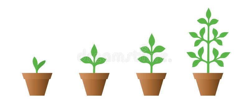 Vectorillustratie van een reeks groene pictogrammen - de fase van de installatiegroei in een geïsoleerde pot vector illustratie