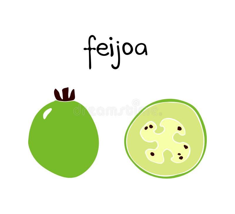 Vectorillustratie van feijoa De zomer tropisch fruit vector illustratie