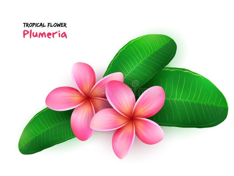 Vectorillustratie van geïsoleerde realistische tropische bloeiende plumeriabloem met bladeren vector illustratie