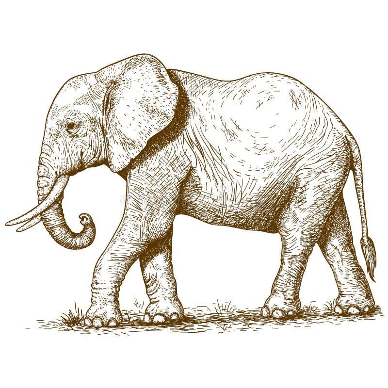 Vectorillustratie van gravureolifant stock illustratie