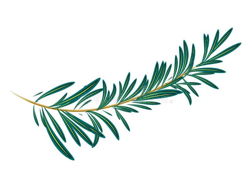 Vectorillustratie van groene rozemarijn stock illustratie