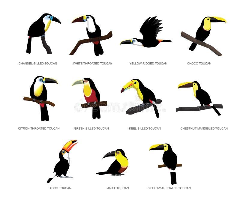 Vectorillustratie van het diverse Toekan de Vastgestelde Beeldverhaal royalty-vrije illustratie