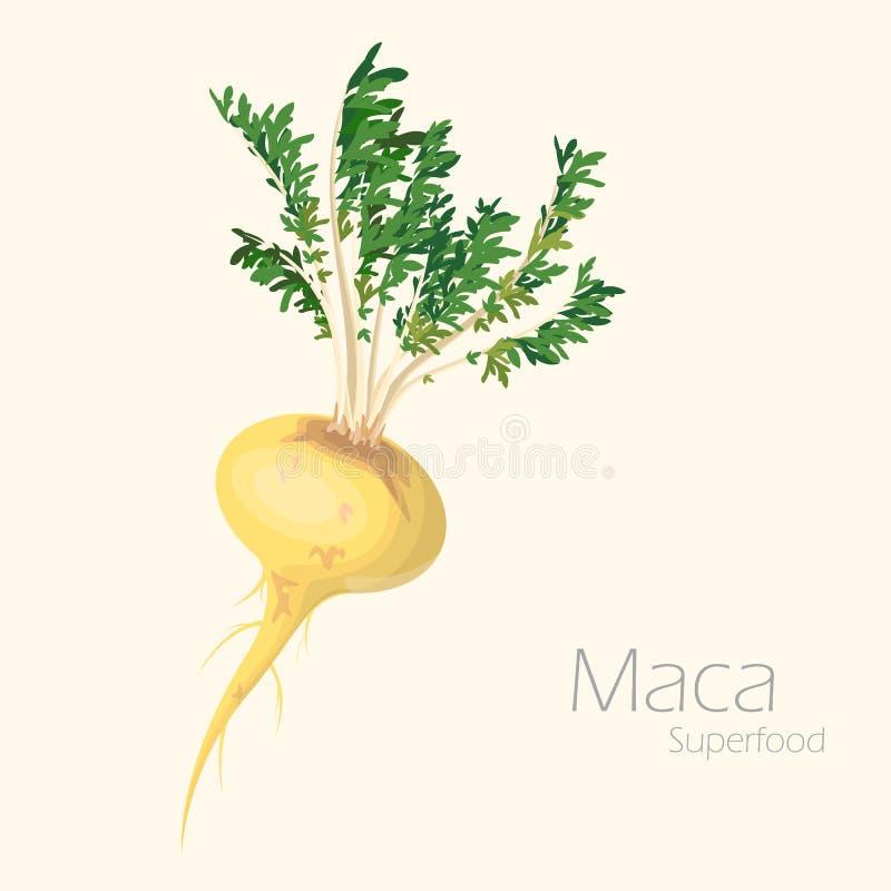 Vectorillustratie van maca voor uw ontwerp royalty-vrije illustratie