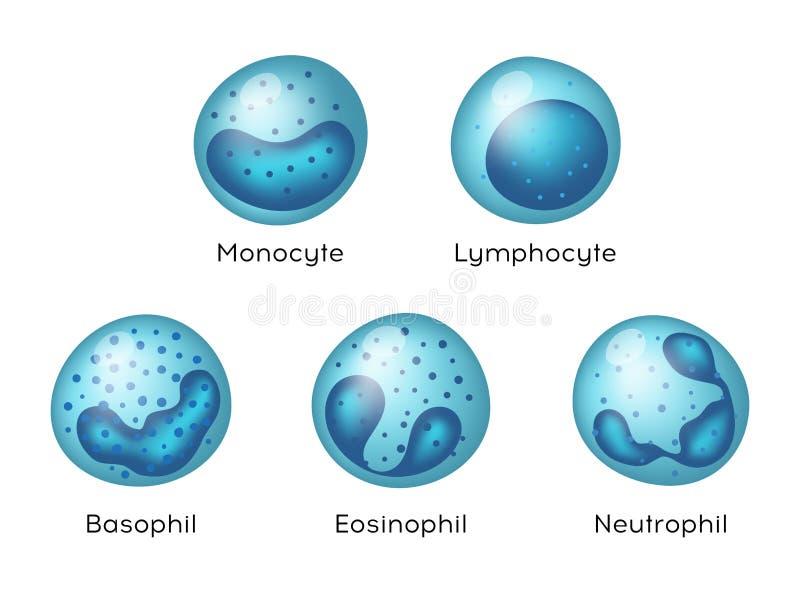 Vectorillustratie van Monocyte, Lymfocyt, Eosinophil, Neutrophil, Basophil Types van bloedcellen royalty-vrije illustratie