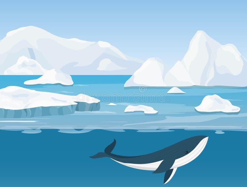 Vectorillustratie van mooi noordpoollandschap van het noordelijke en Antarctische leven Ijsbergen in oceaan en onderwaterwereld stock illustratie