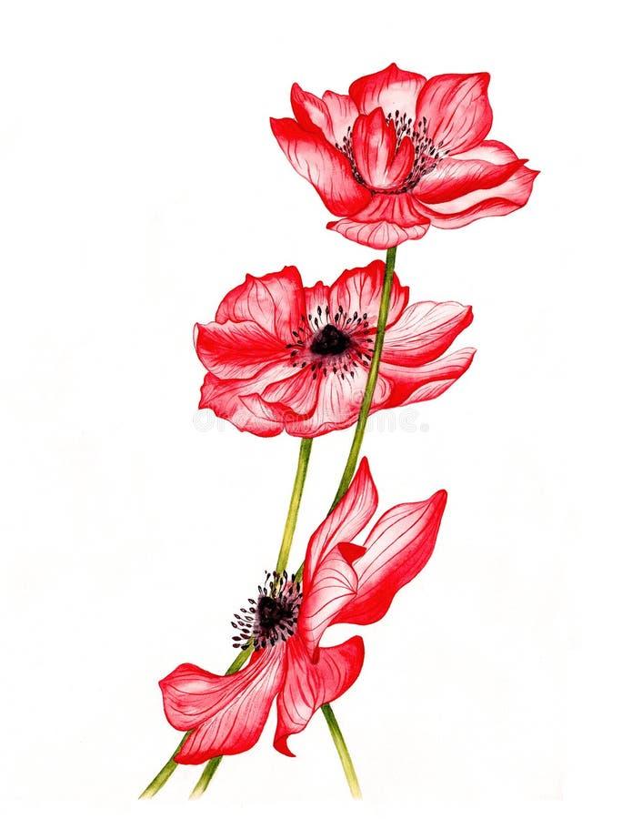 Vectorillustratie van mooie rode anemonenbloemen royalty-vrije stock foto