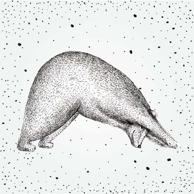 Vectorillustratie van pret een beer op uitstekende achtergrond Van de de ochtendpraktijk van de drukhouding pranayamaasana stelt  vector illustratie