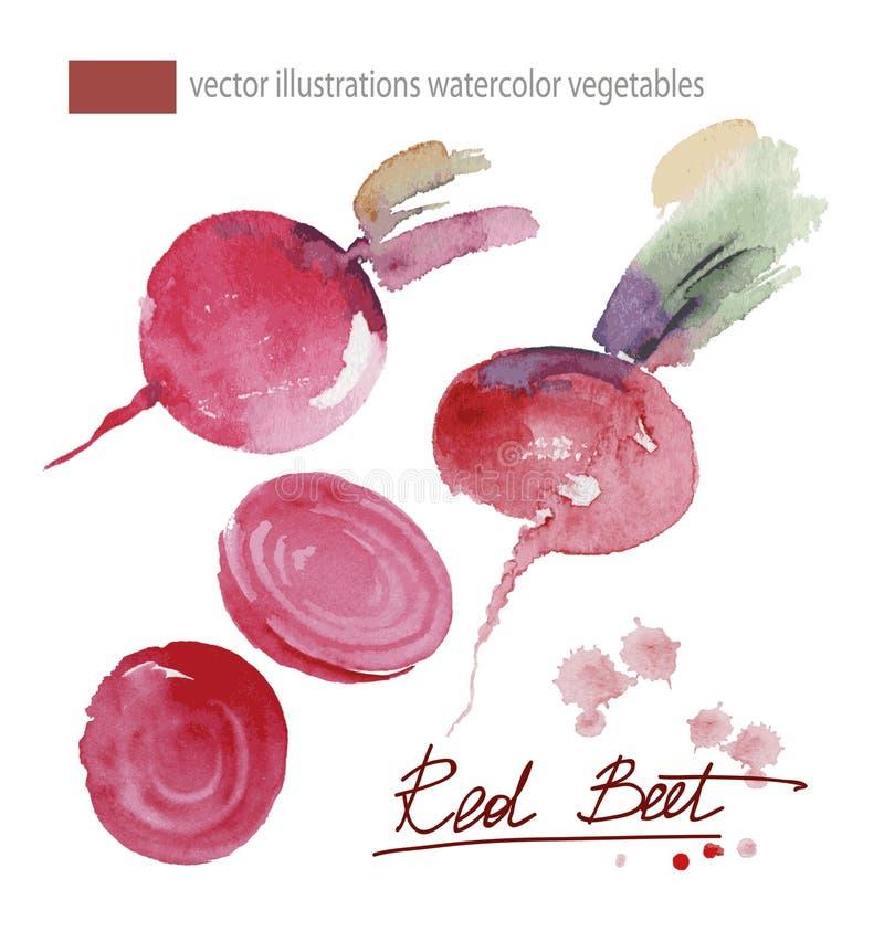 Vectorillustratie van rode biet, vastgestelde waterverf vector illustratie