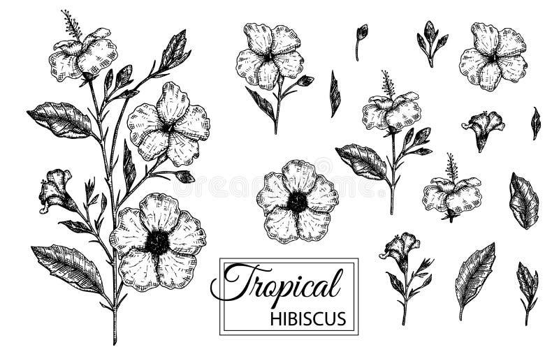 Vectorillustratie van tropische die bloem op witte achtergrond wordt ge?soleerd vector illustratie