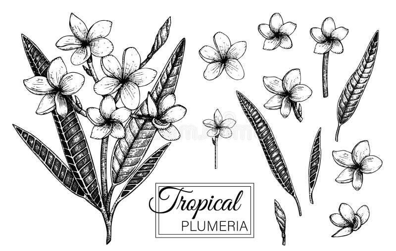 Vectorillustratie van tropische die bloem op witte achtergrond wordt ge?soleerd stock illustratie