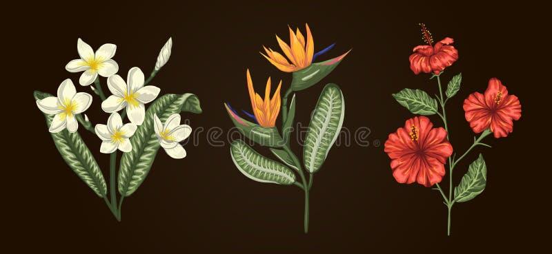 Vectorillustratie van tropische die bloemboeketten op witte achtergrond wordt geïsoleerd stock illustratie