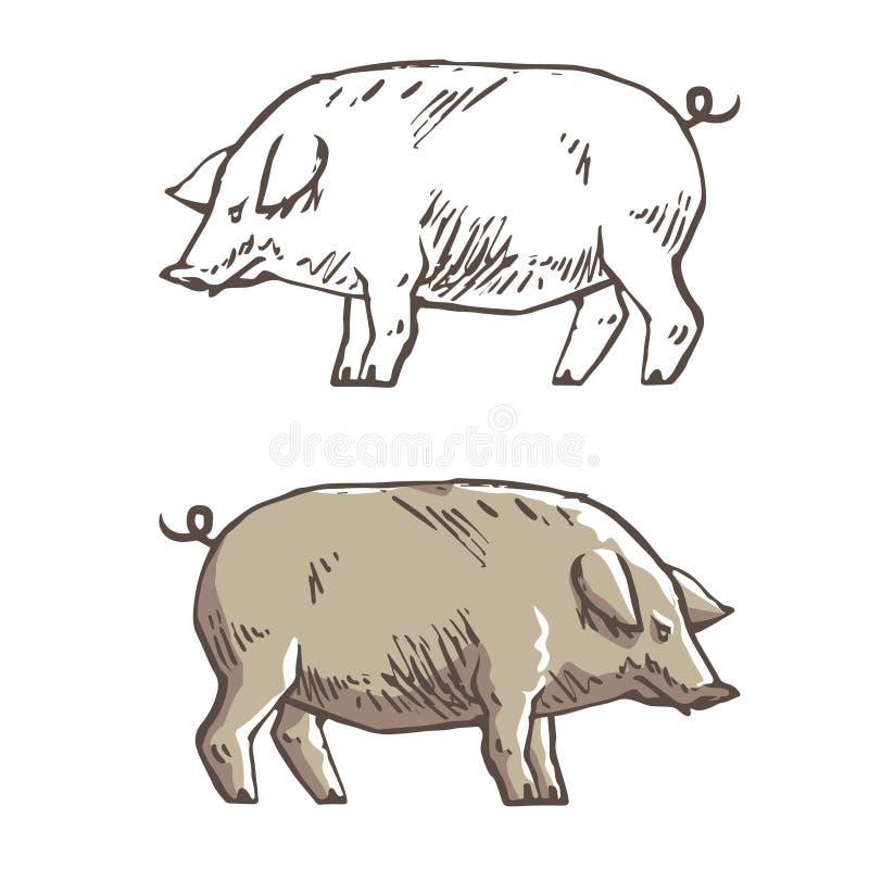 Vectorillustratie van varken in grafische stijl, de illustratie van de handtekening stock illustratie