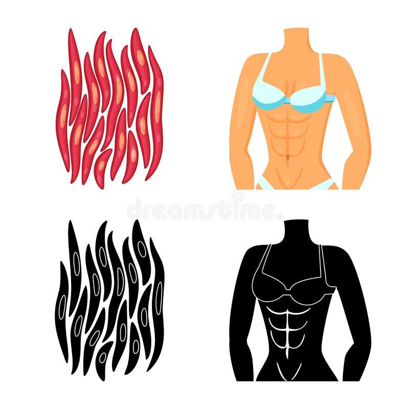 Vectorillustratie van vezel en spiersymbool Inzameling van vezel en lichaams vectorpictogram voor voorraad royalty-vrije illustratie