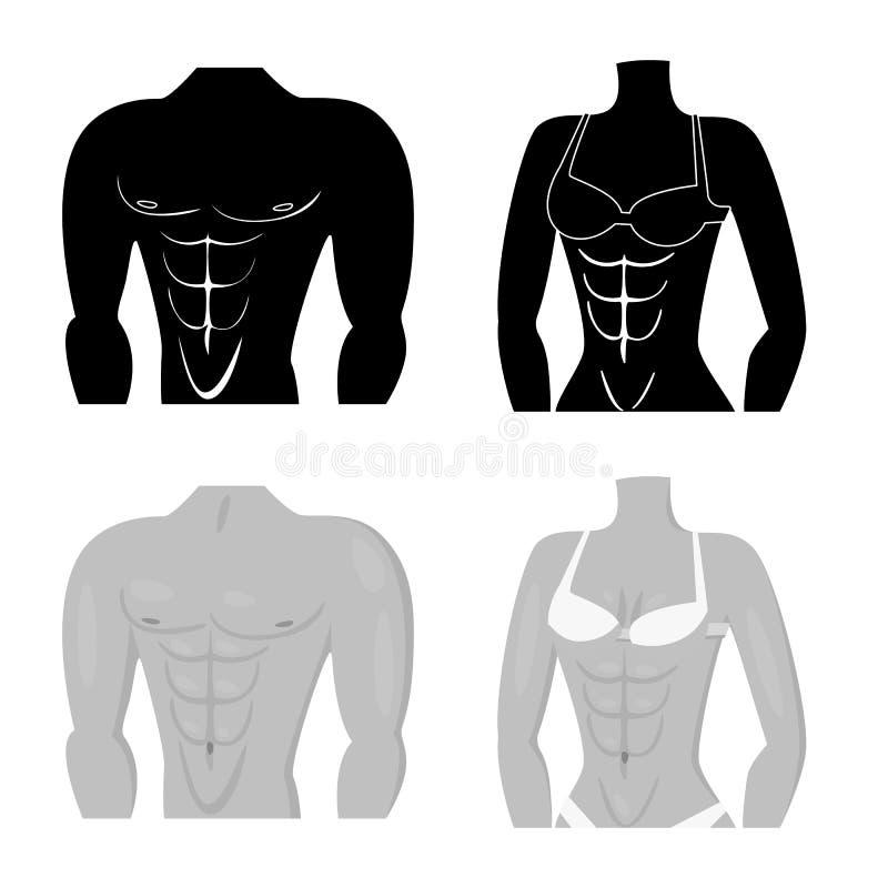 Vectorillustratie van vezel en spiersymbool Reeks van vezel en lichaamsvoorraad vectorillustratie stock illustratie