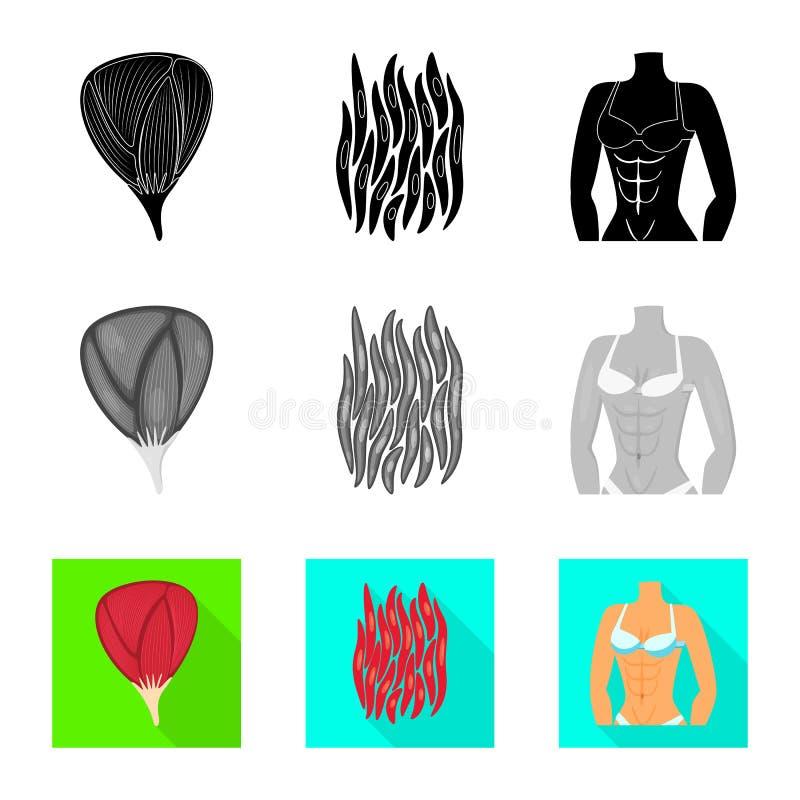 Vectorillustratie van vezel en spierteken Reeks van vezel en lichaamsvoorraadsymbool voor Web stock illustratie