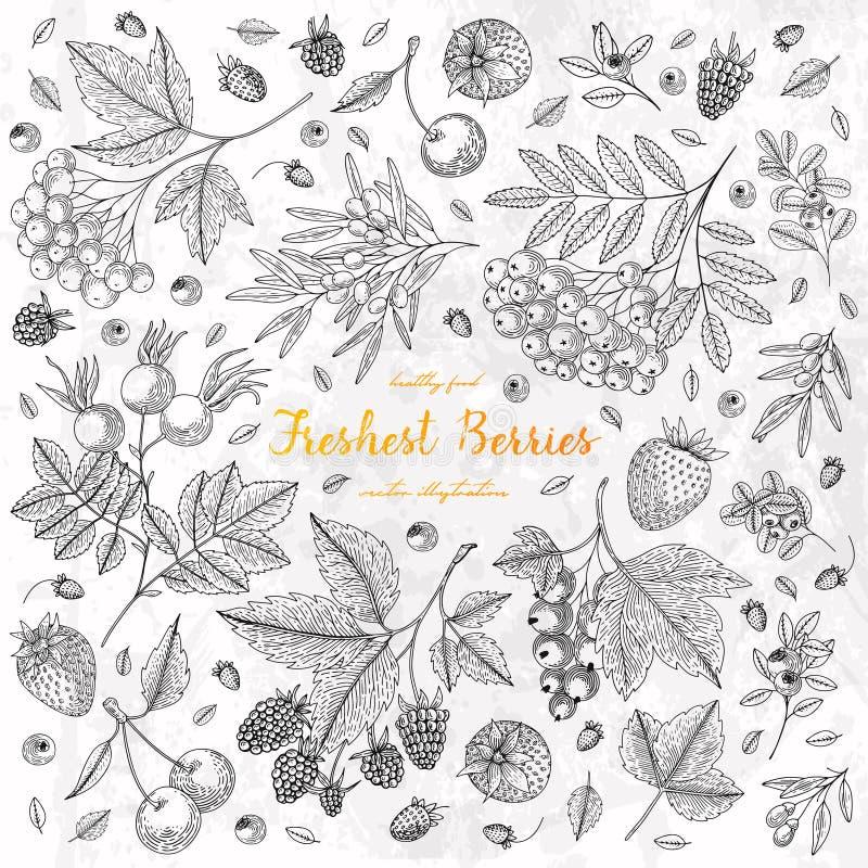 Vectorillustratiekader met bes, bosbes, Amerikaanse veenbes, goji, framboos, aardbei Het gezonde malplaatje van het voedselontwer royalty-vrije illustratie