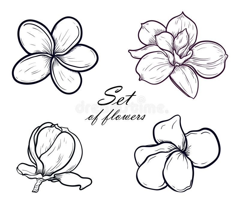 Vectorillustratiereeks die van mooie magnolia en plumeria, geïsoleerde de lentebloemen trekken op witte achtergrond stock illustratie