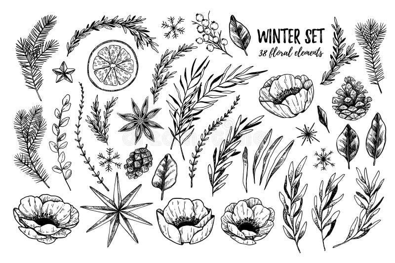 Vectorillustraties - de Winter bloemen vastgestelde bloemen, bladeren vector illustratie
