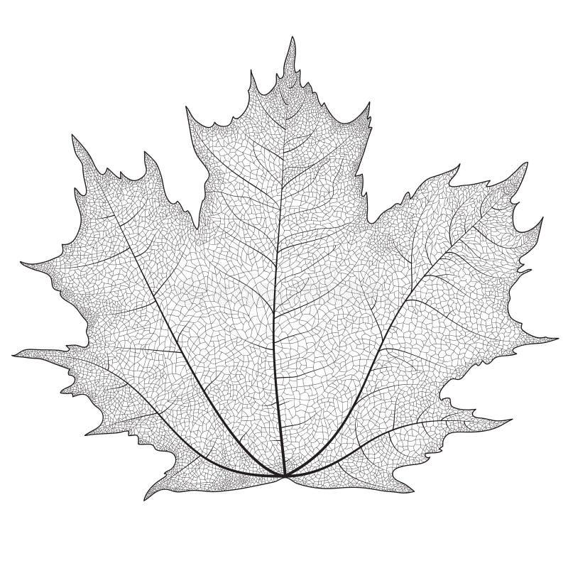 Vectorillustratiesilhouet van aders op een bladesdoorn stock illustratie