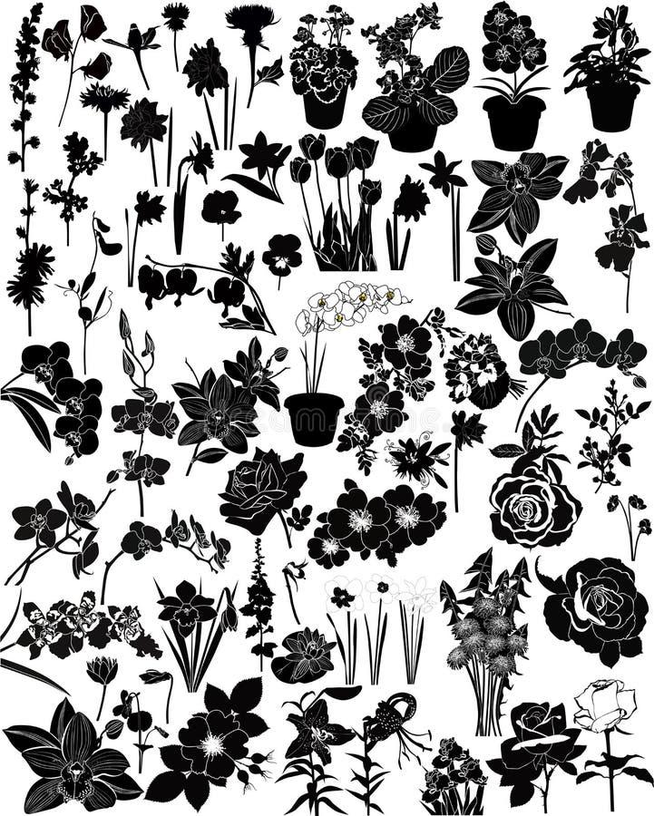 Vectorinzameling van bloemen vector illustratie