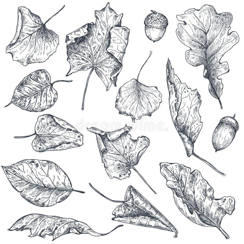Vectorinzameling van hand getrokken droge de herfstbladeren vector illustratie