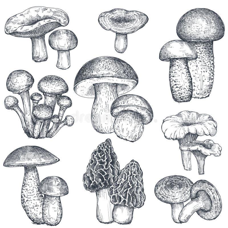 Vectorinzameling van hand getrokken paddestoelen in schetsstijl royalty-vrije illustratie