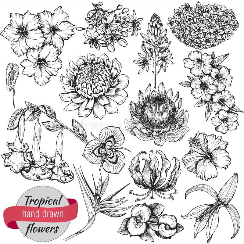 Vectorinzameling van hand getrokken tropische bloemen en bladeren royalty-vrije illustratie