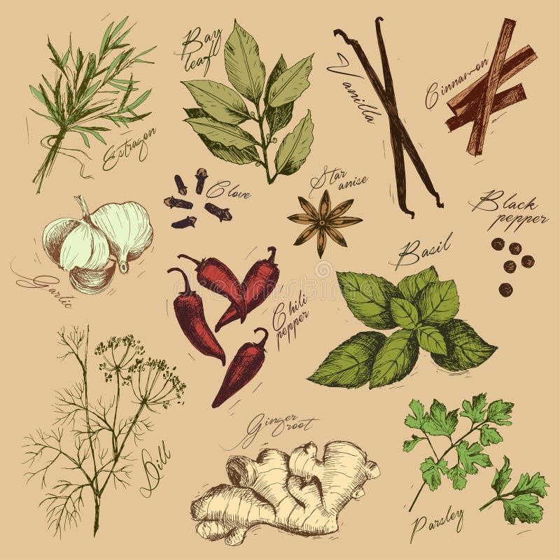 Vectorinzameling van inkthand getrokken kruiden en kruid stock illustratie