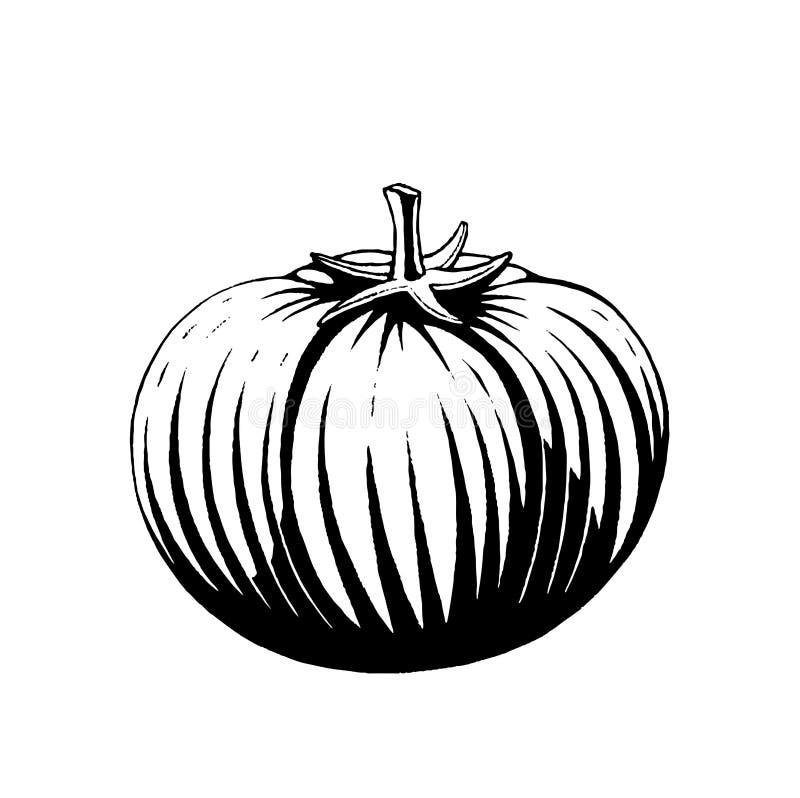 Vectorized σκίτσο μελανιού μιας ντομάτας ελεύθερη απεικόνιση δικαιώματος