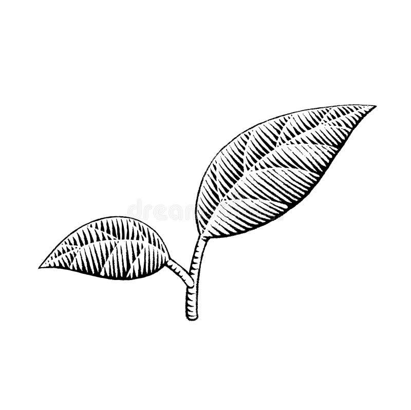 Vectorized atramentu nakreślenie liście ilustracji