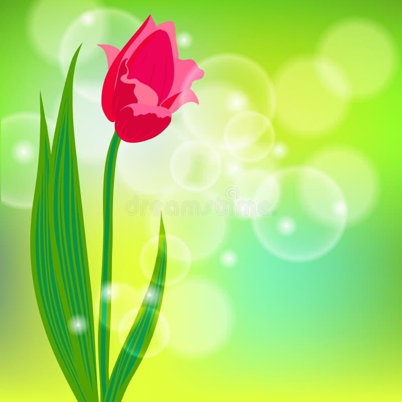 Vectorkaart met rode tulp op lichtgroene bokeh vector illustratie